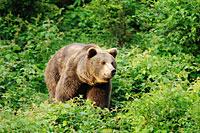 3-Sterne Aktivurlaub Bayerischer Wald