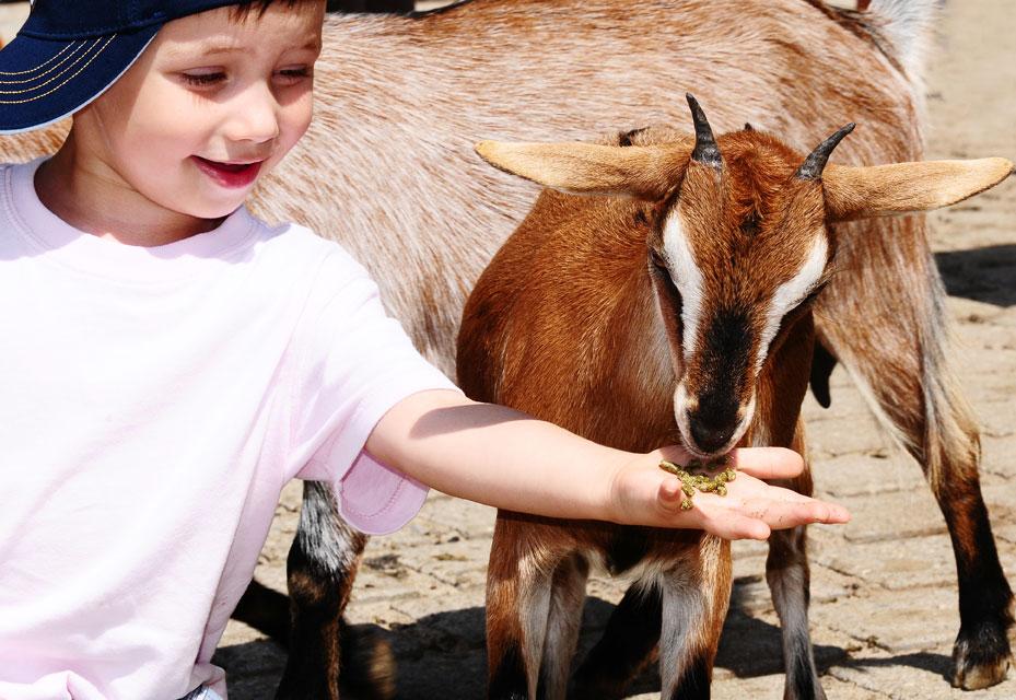 Kinder auf dem Bauernhof im Bayerischen Wald