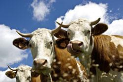 Heimische Tiere beim Landurlaub im Bayerischen Wald